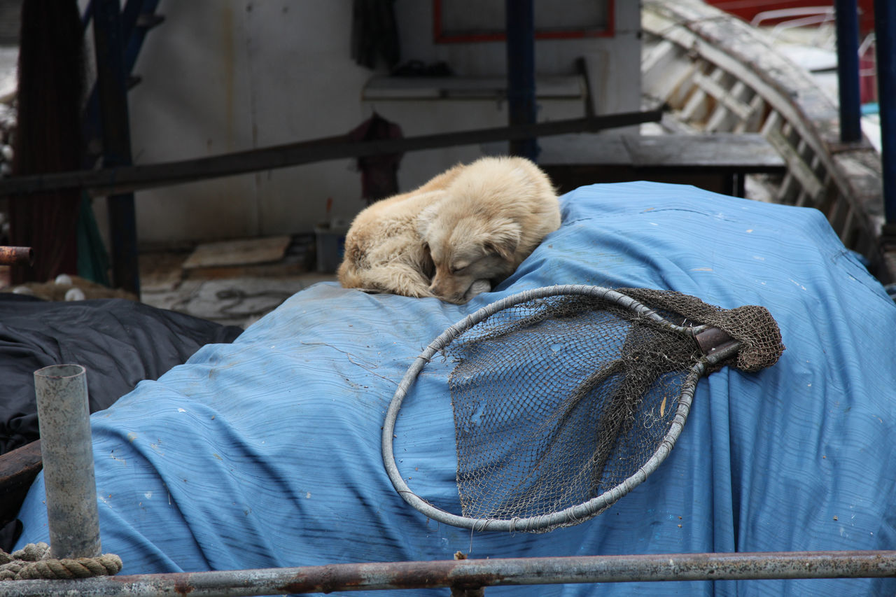 street dog asleep on a pile of covered fishing nets Animal Themes Canine Close-up Curled Up Day Dog Domestic Animals Fishing Net Mammal Net No People One Animal Outdoors Sleeping Street Dog