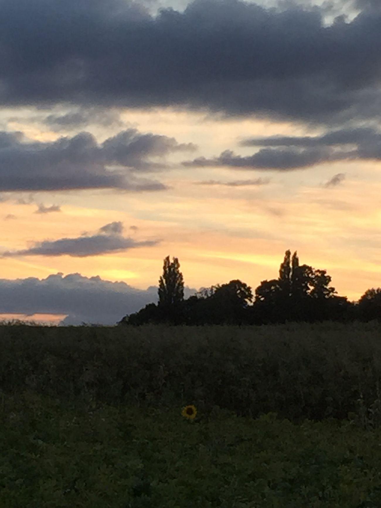 Sky Clouds And Sky Hertfordshire Landscape_photography Landscape Fields Countryside Aston Sunflower