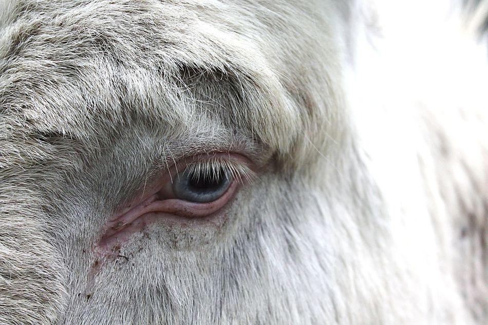 Beautiful stock photos of donkey, Animal Body Part, Animal Eye, Animal Hair, Animal Themes