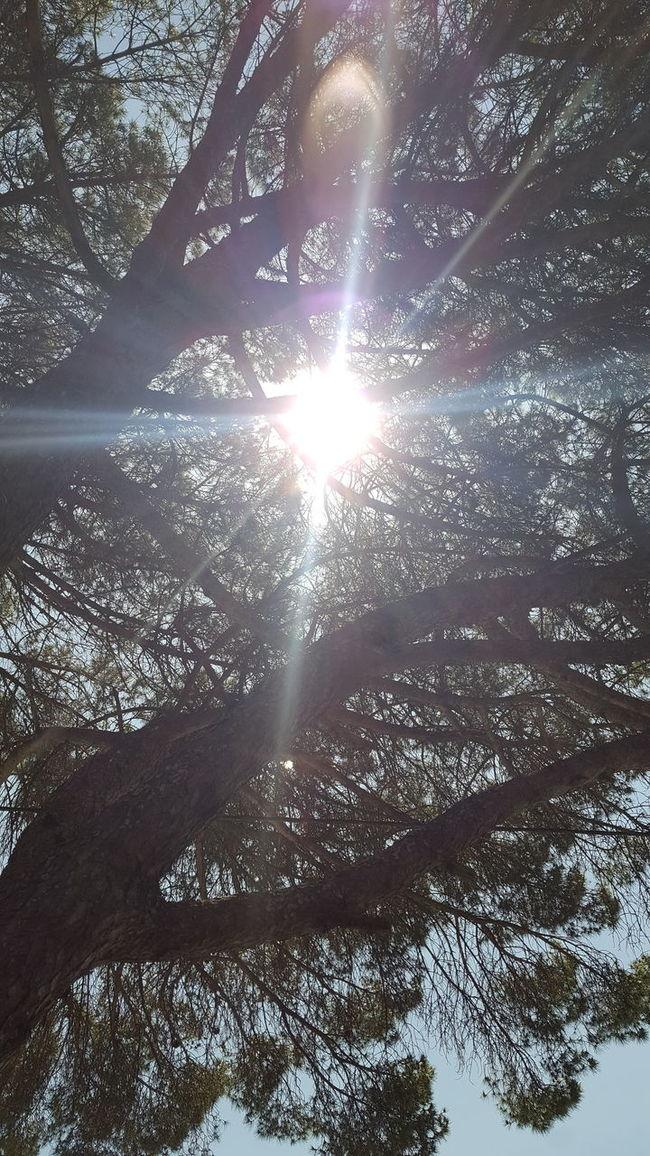 Beauty In Nature Contraluz Day No People Non-urban Scene Outdoors Portugal Raiosdesol Sun Sunny Tranquility Tree