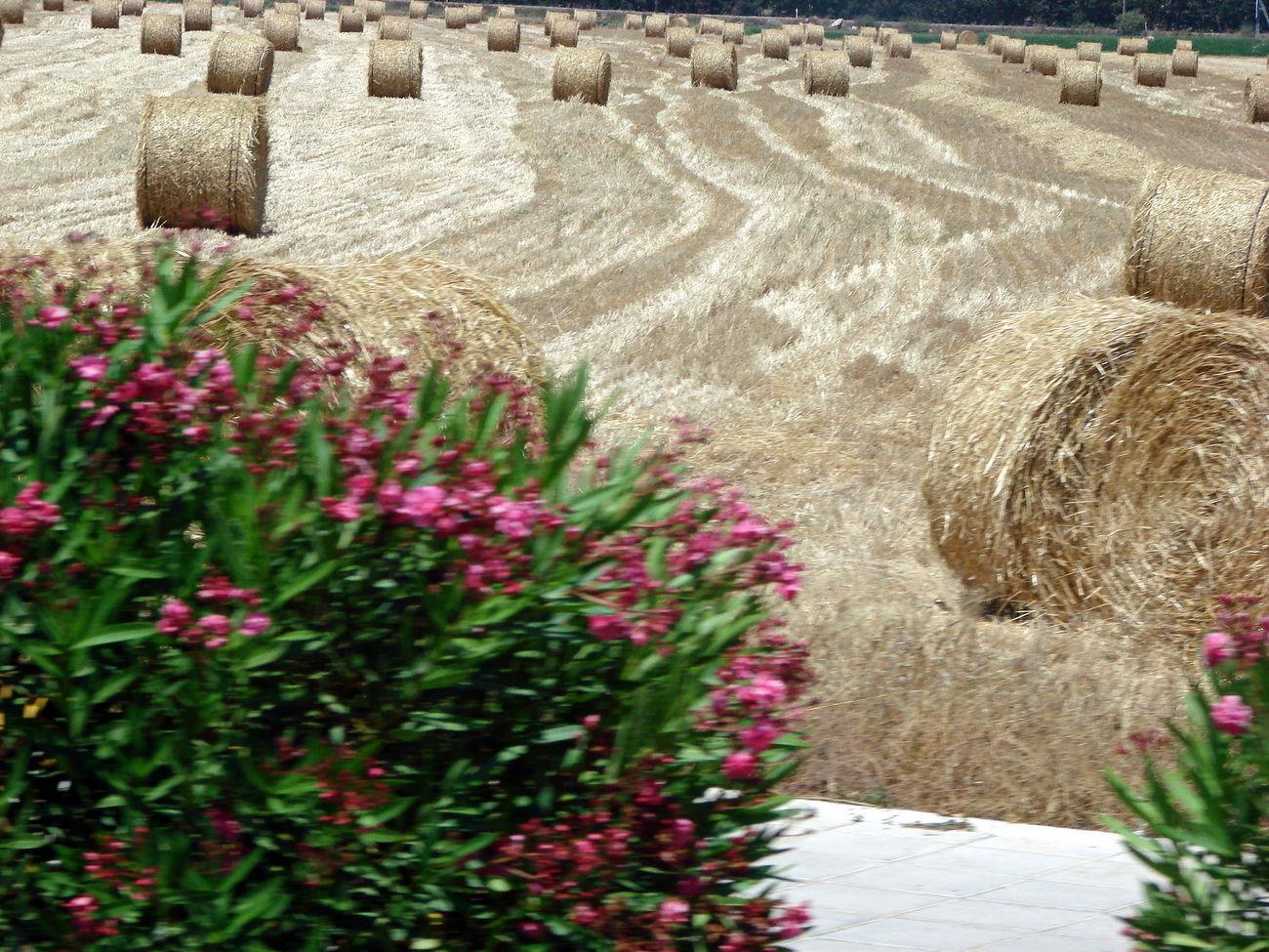 Bush Champ Cyprus Field Flowers Hayrick Haystack Haystacks Meule Yellow Grass The Great Outdoors - 2016 EyeEm Awards