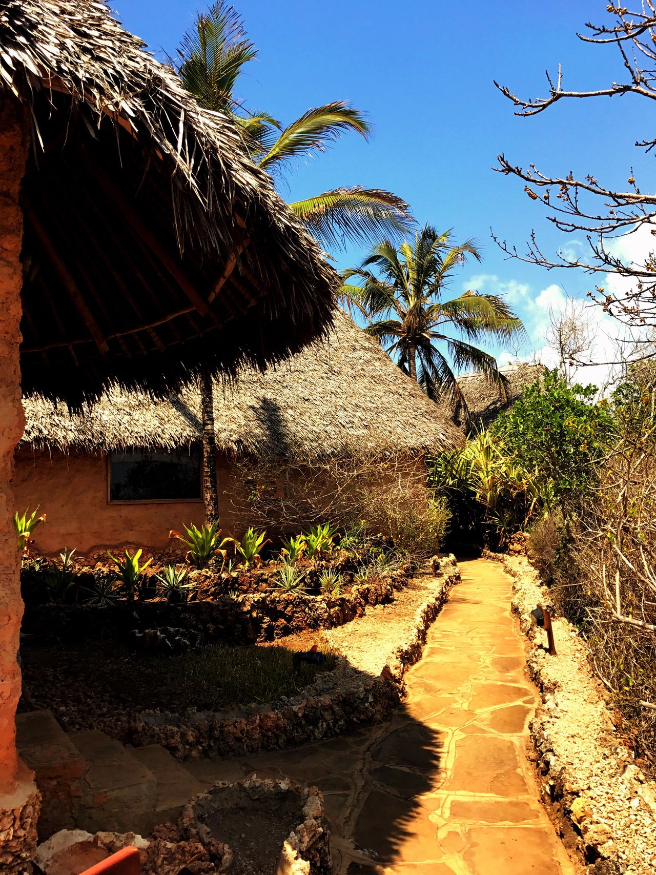 Cottage African Cottage Africa Kenya Resort Sunlight Growth Nature Shadow Palm Tree The Way Forward Tree Beauty In Nature No People Tranquil Scene Beach Sky