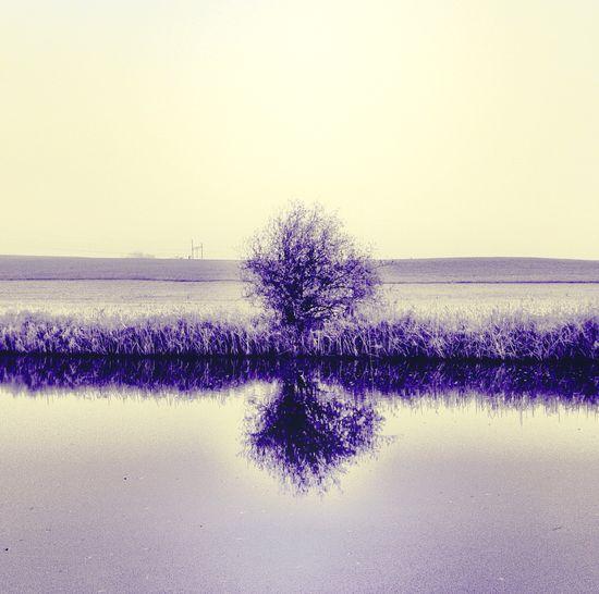 ein Baum Ein Baum