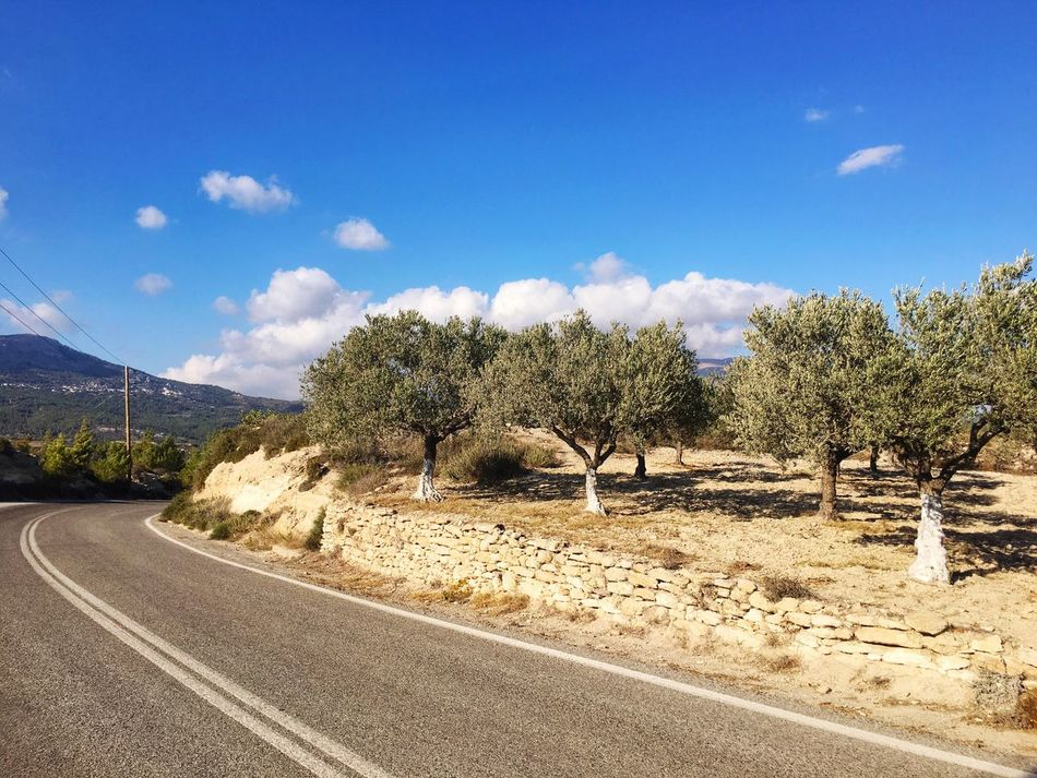 Road in Rhodes Road Tree Nature Sky Landscape No People Transportation Highway Mountain Winding Road Greece Rhodes Rhodos Olive Tree Olives Trip Vacations Holiday