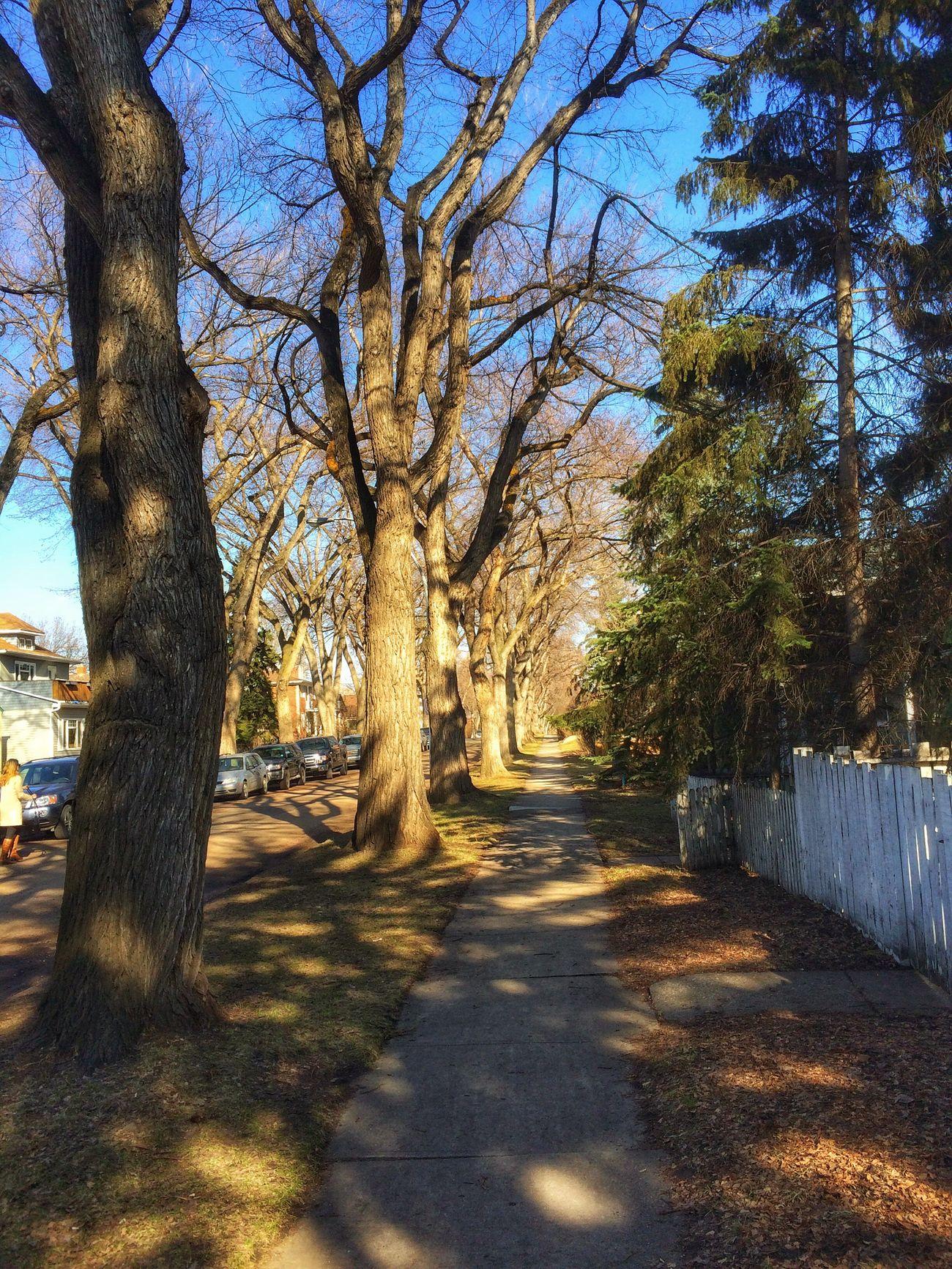 Tree Shadow Tree Trunk Sunlight Outdoors Change Of Seasons