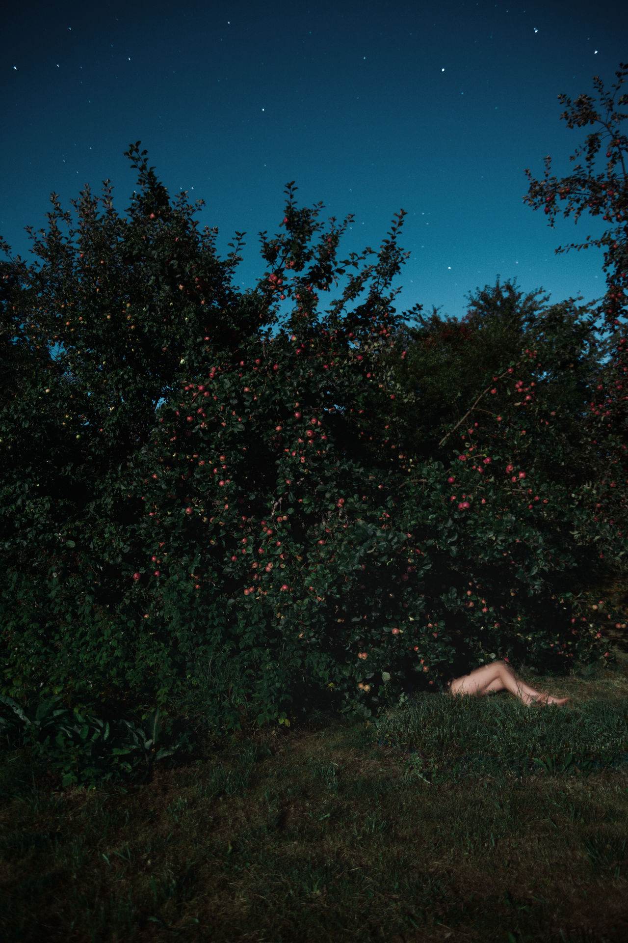 The Cider House Legs Apple Tree Apples Garden Grass Green Legs Linas Was Here Long Exposure Nature Nightscape Starry Sky Stars Summer Night