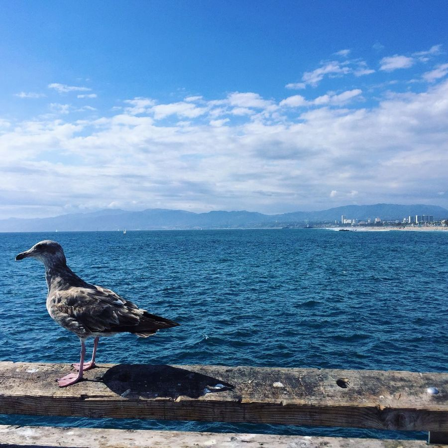 Los Angeles, California Marina Del Rey Bird Seagull Water Sky Sea Travel Photography