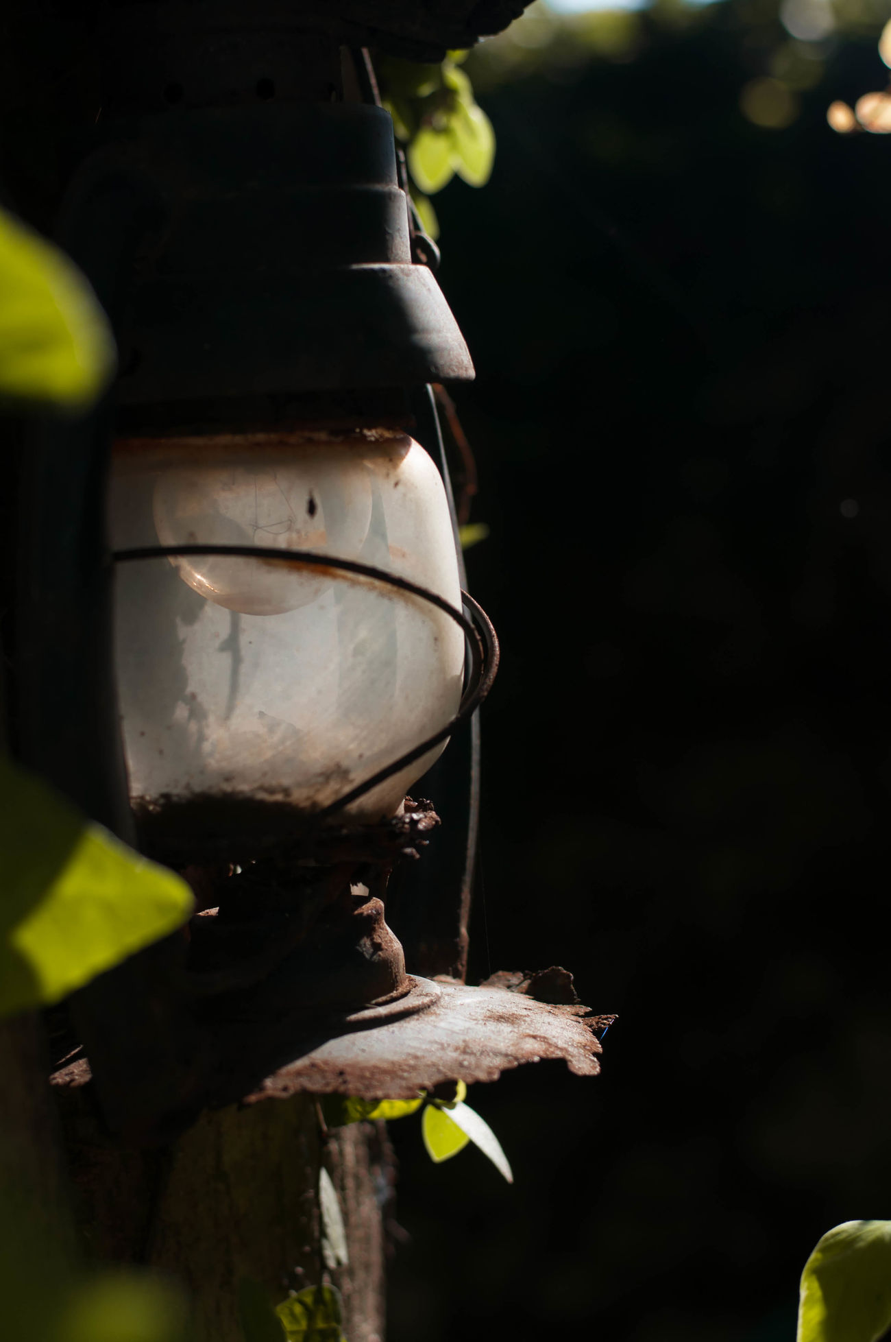 rusty lanthern Beauty In Nature Close-up Day Focus On Foreground Freshness Nature No People Outdoors Rusty Lantern Sunlight Tree Nikond90 The Great Outdoors - 2017 EyeEm Awards