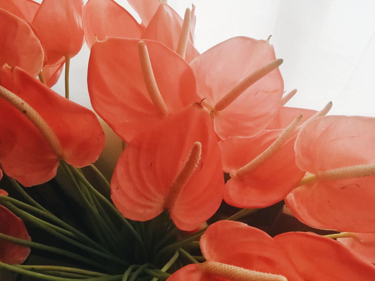 Blooms Nature Plant Close-up Flower Flower Head Flower Vase Indoor