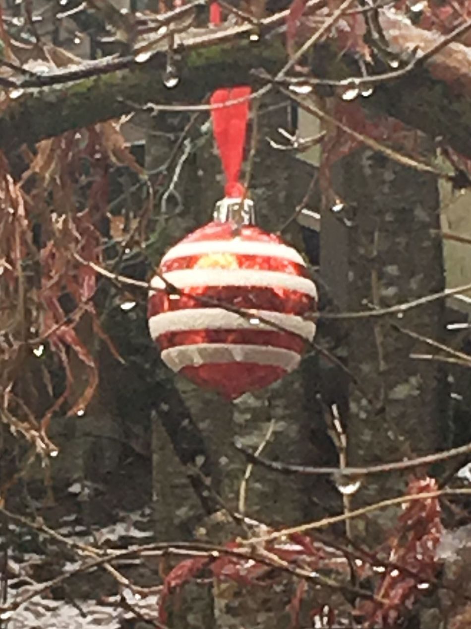 A NW style Christmas Rainy Christmas Rain Ice Christmas Little Things Rainy Tranquility Beauty In Nature Beautiful Weather Close-up Winter Weather Red Xmas Xmas Decorations Holiday Cheer Christmas Decoration Nw American Oregon Lake Oswego Portland
