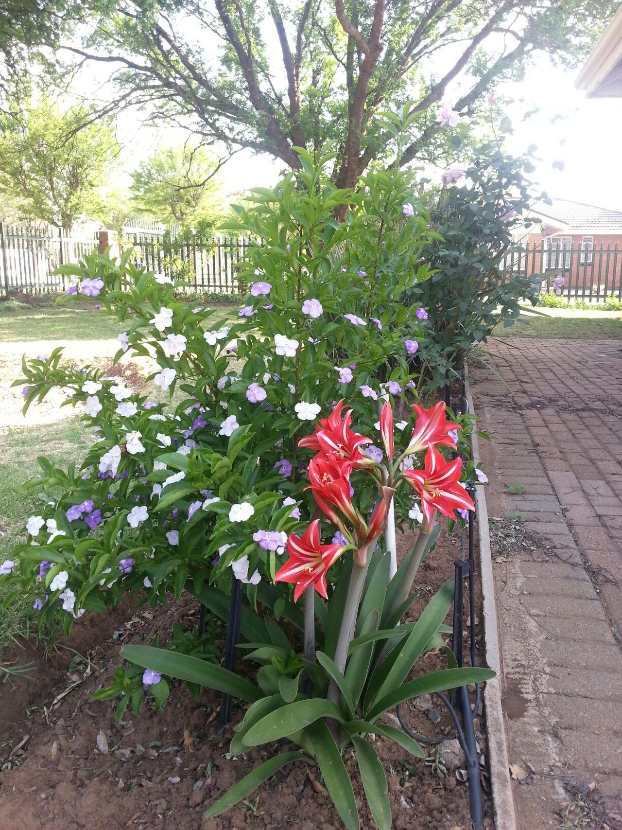 Flowers Flowers :) Springtime Spring Flowers