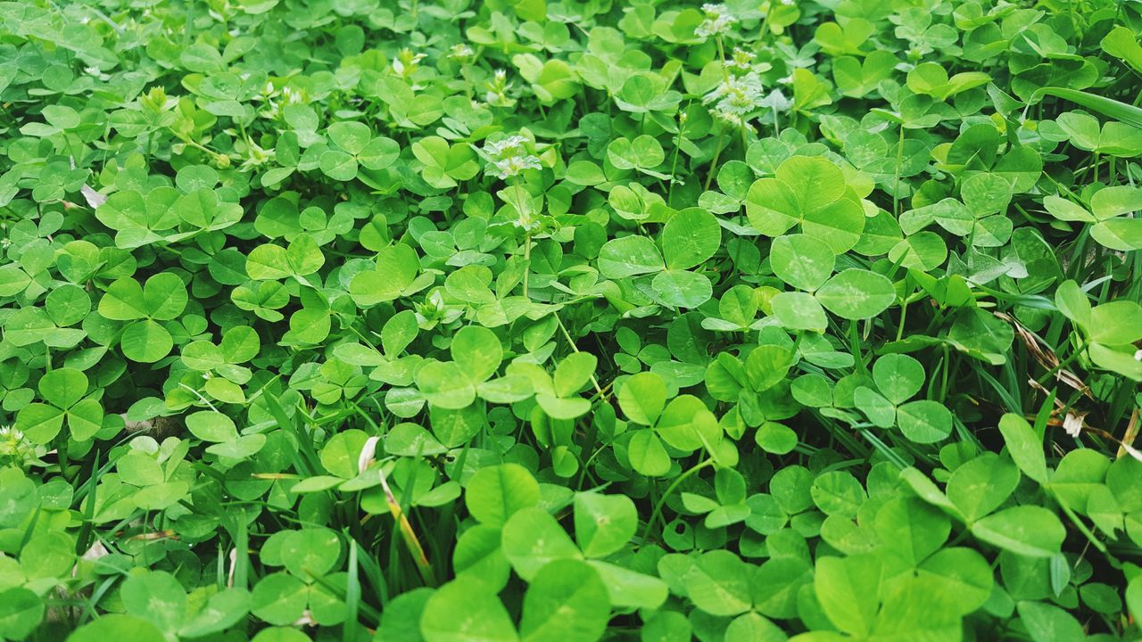 March is here Lucky clovers are All Around