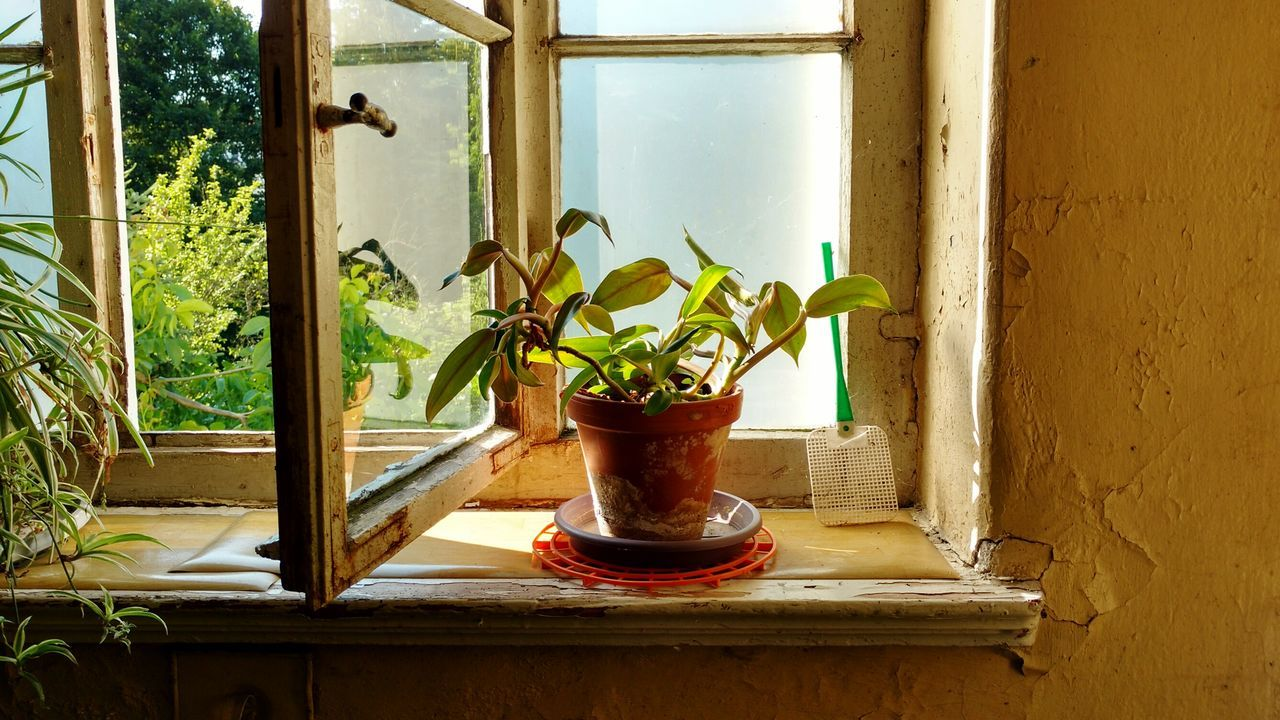 Window Indoors  Plant Growth Day Glass Pot Potted Plant Old Peaceful Evening Light Evening Shabby Old House Home Reflection Window Frame Window Sill Window Reflections Shadows & Lights Shadows Evening Glow Swatter Hall Corridor