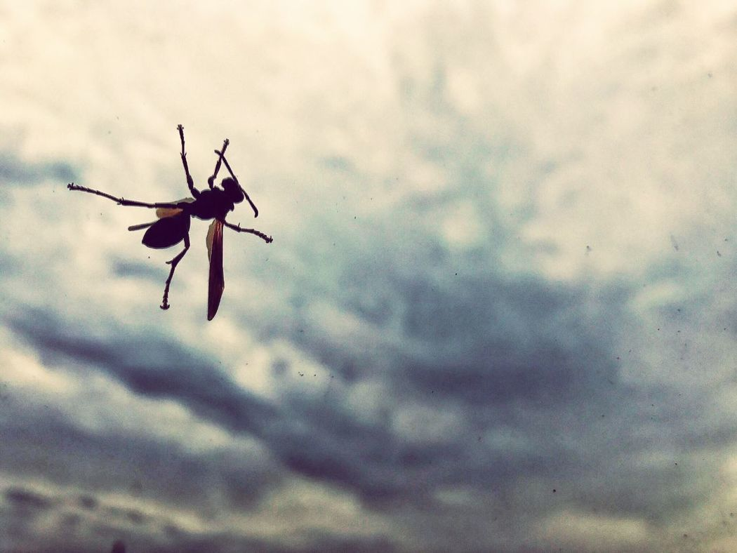 EyeEm Selects EyeEm Selects Sky Low Angle View Insect Cloud - Sky Day Outdoors Animal Themes No People Nature Close-up EyeEmNewHere