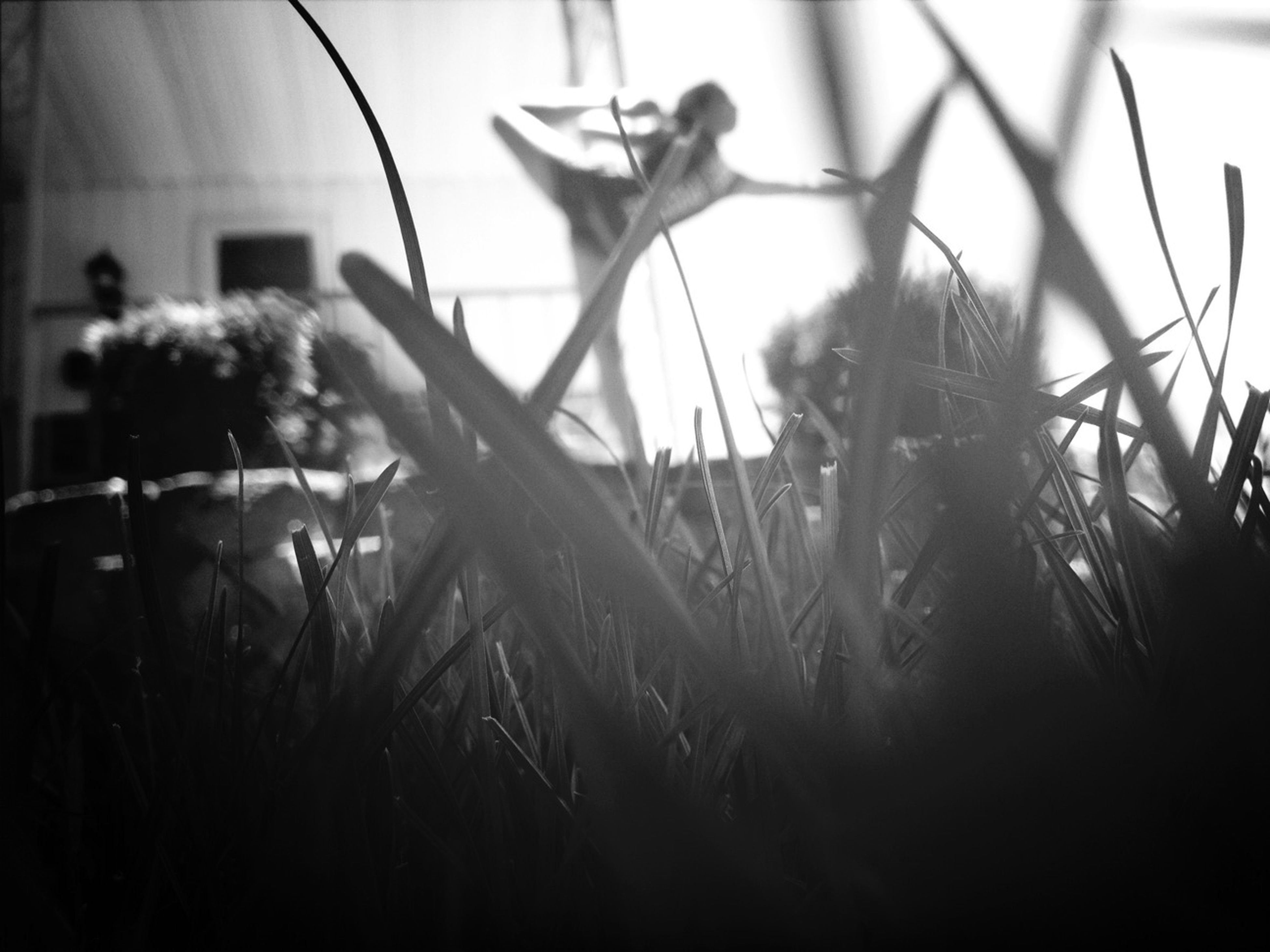 plant, grass, field, close-up, focus on foreground, growth, selective focus, day, sunlight, front or back yard, indoors, nature, no people, grassy, part of, metal, abandoned, sky