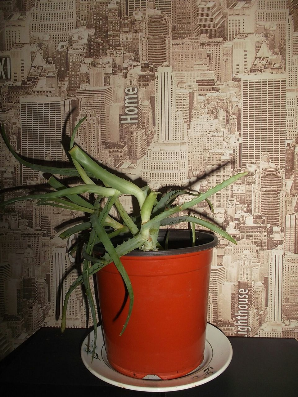 growth, potted plant, indoors, plant, no people, architecture, building exterior, close-up, nature, day, city, freshness