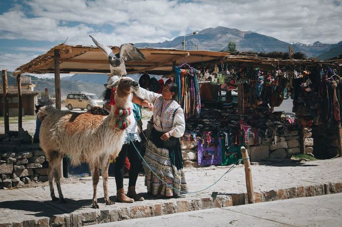 Llama, hawk, and souvenir stand Sky Animal Themes Village Mountain Lifestyles Built Structure Travel Destinations Real People Outdoors Standing Day Mammal Architecture One Person Llama People Hawk Peru Tourism Tourist Attraction  Souvenirs Colca