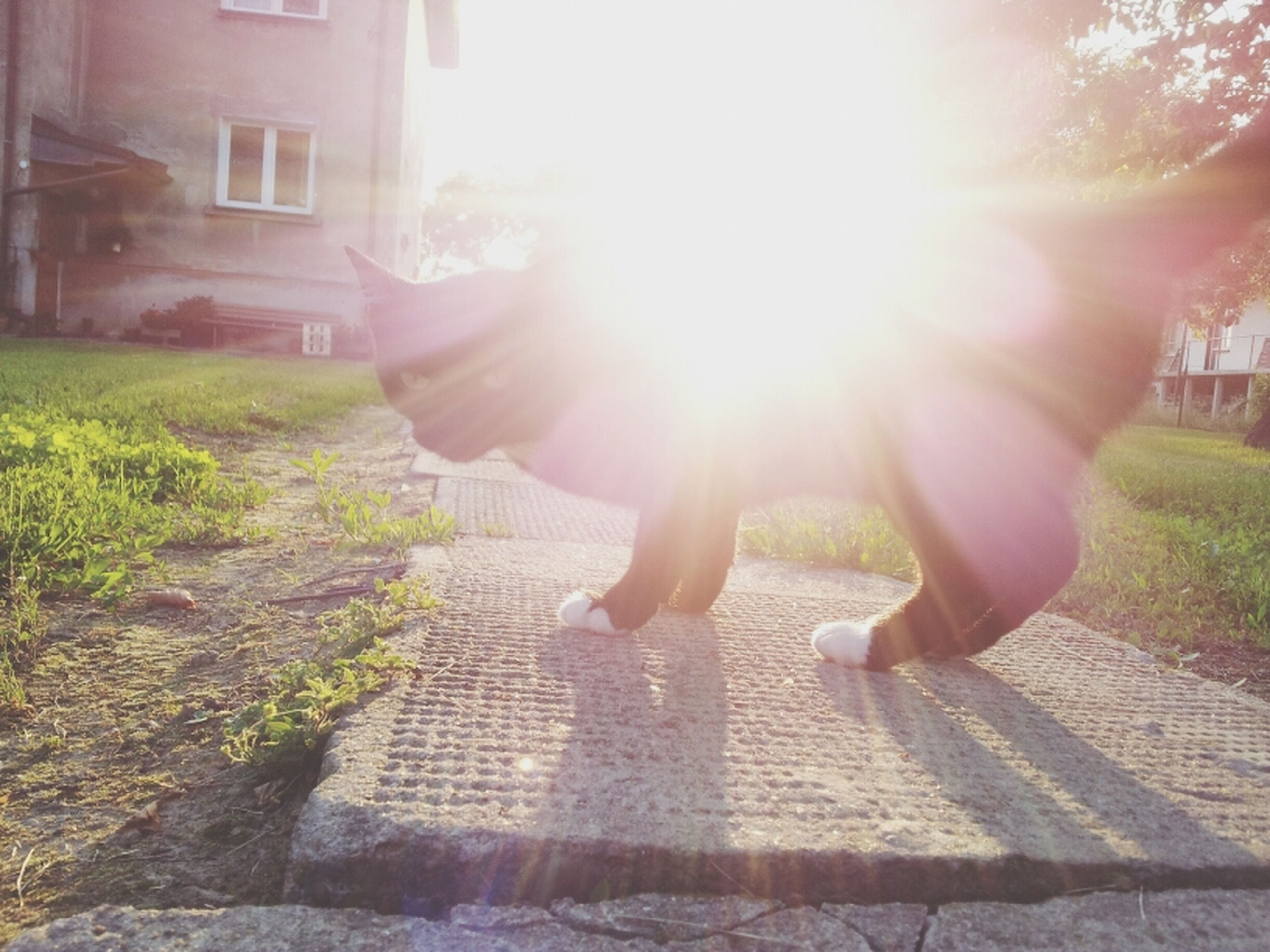 sun, sunbeam, sunlight, lens flare, architecture, building exterior, built structure, full length, sunny, lifestyles, leisure activity, tree, shadow, bright, day, grass, person, walking