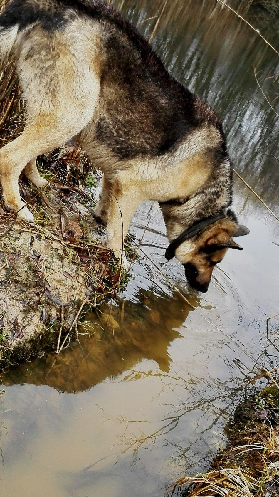 Toriukas, Hi! Dog❤ Dog Life