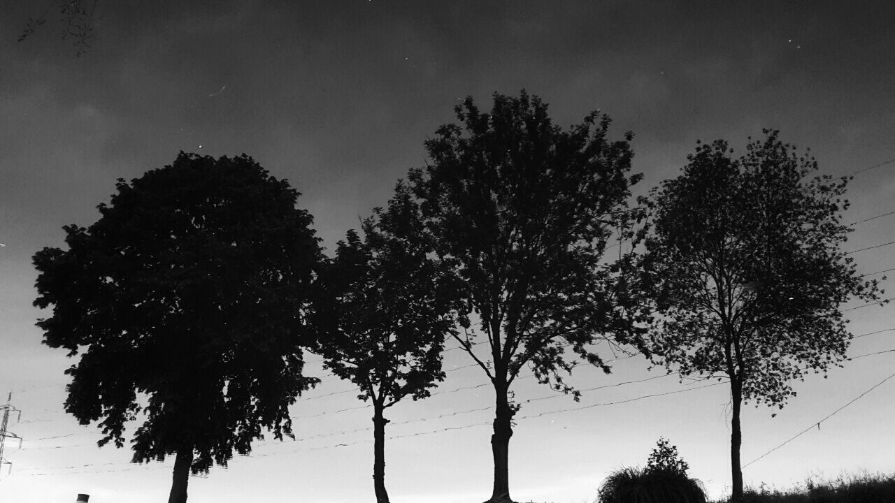 Water Trees Reflection Blackandwhite Evening Electricity