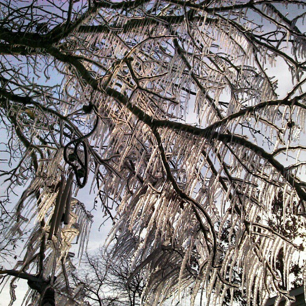 Ice Icetree Homemade Sunsetharbornc