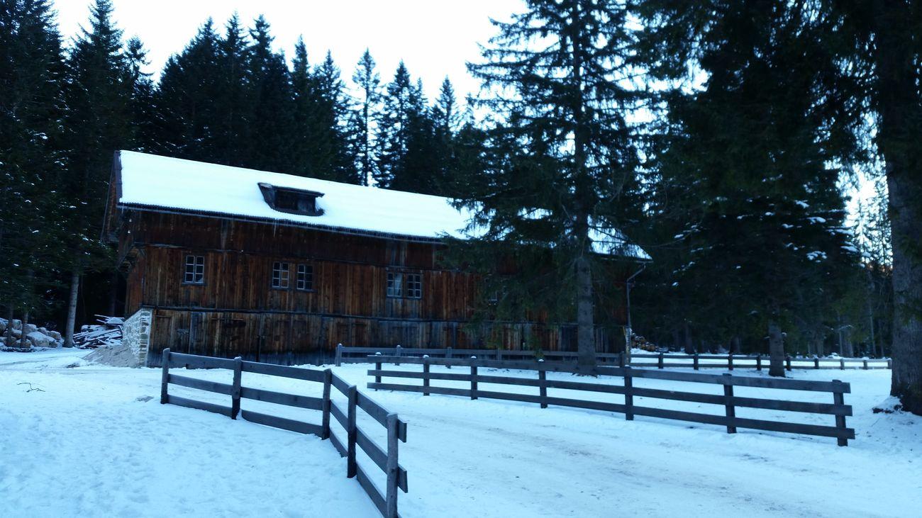 Winterscene Tree No People Nature Outdoors Winter Wintertime POV Natureobsessed Beautyful  Randomshot Tranquil Scene Tirolnature