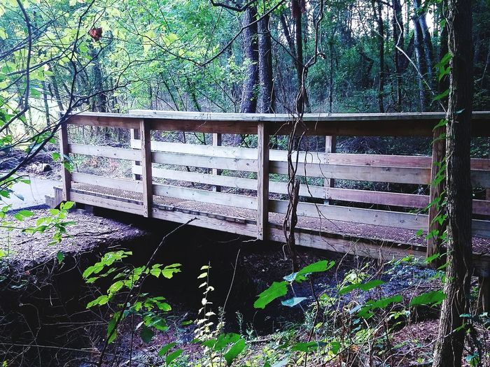 Wood Wood - Material Trees Magical Trees Forest Magical Forest Fairy Forest Hiking Trail Woods Tennessee Colors Colour Of Life Landscape Beauty In Nature Wooden Bridge Walking Bridge Foliage Nature Leaves Environment Dusk Dark Evening Sunset