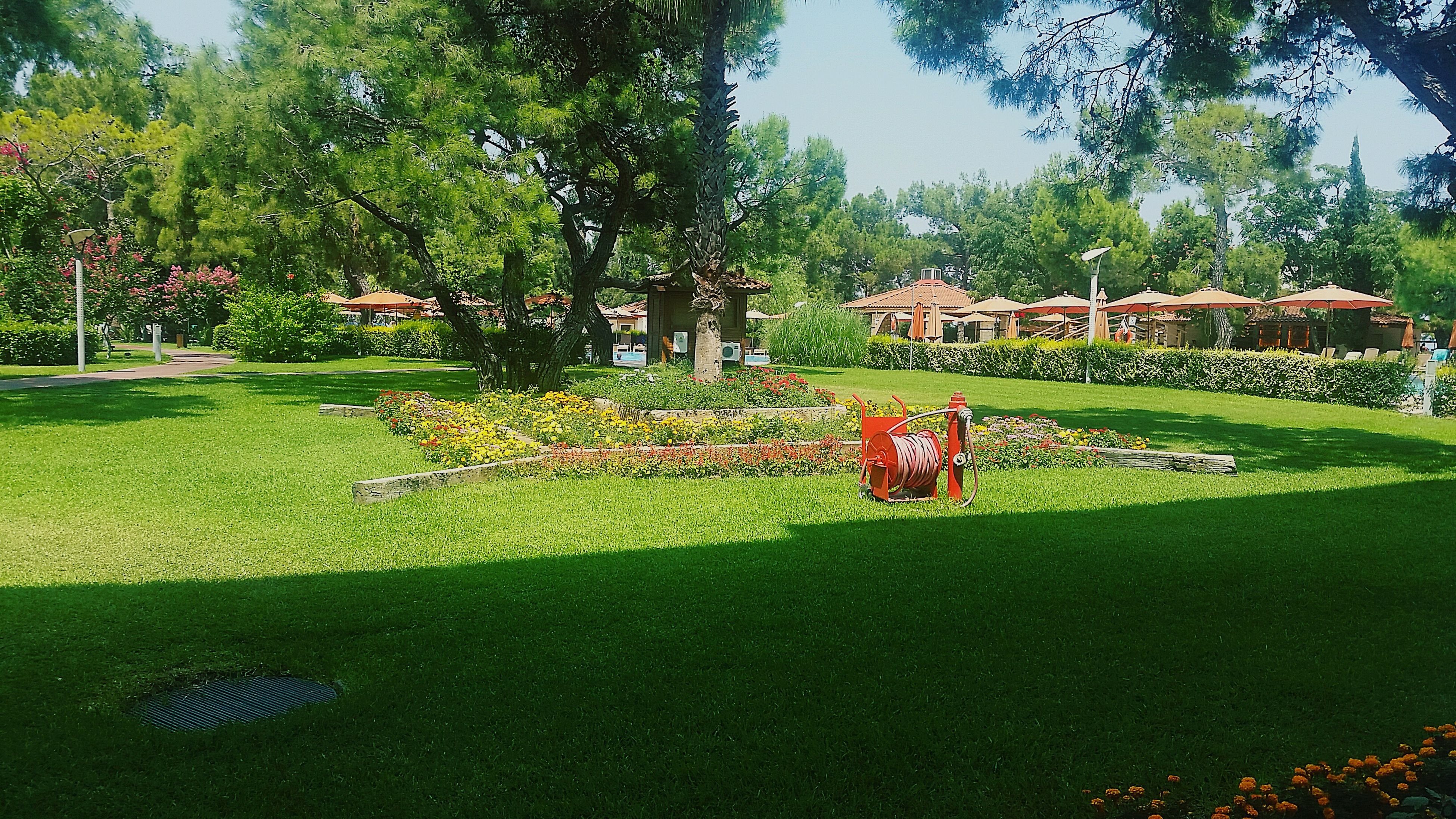 tree, grass, growth, green color, flower, park - man made space, green, day, plant, tranquility, nature, petal, fragility, formal garden, beauty in nature, lawn, tranquil scene, freshness, outdoors, solitude, garden, growing, red, remote