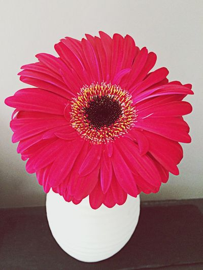 Flowers Pink .