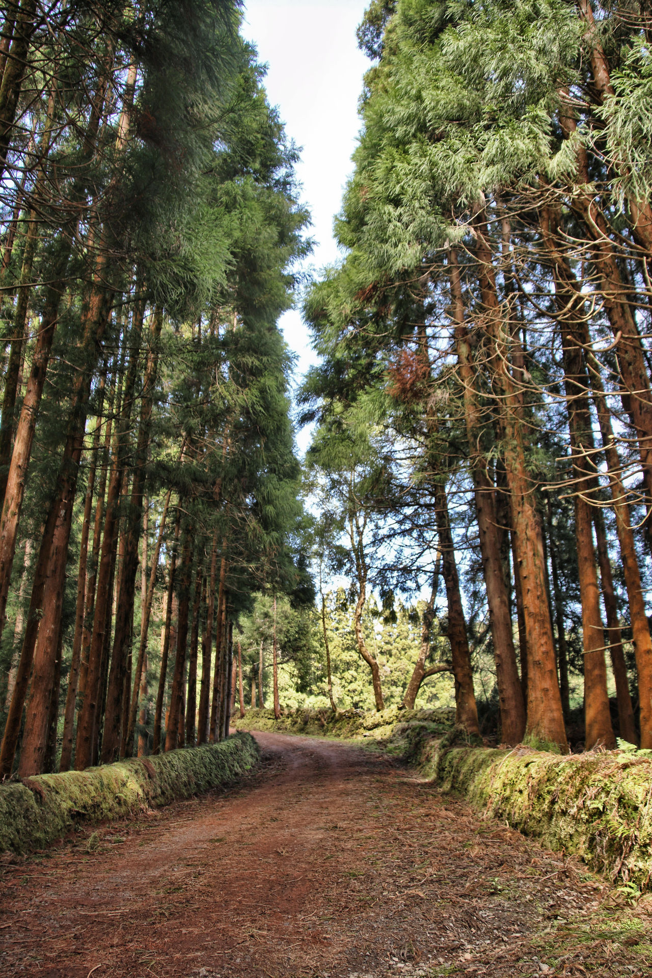 Terceira Island, Azores - Portugal Atlantida Azores Azores, Terceira Beauty In Nature Day Forest Green Color Growth Landscape Nature No People Ocean Outdoors Paradise Portugal Scenics Sky Terceira Island The Way Forward Tranquil Scene Tranquility Tree Tree Trunk