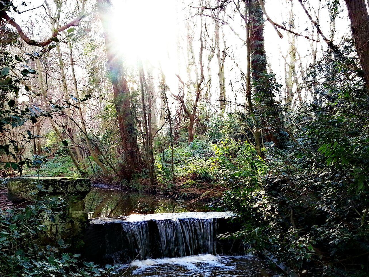 Water Reflections Waterfall Woods WoodLand Stream Arrowe Park Arrowe Brook Wirral