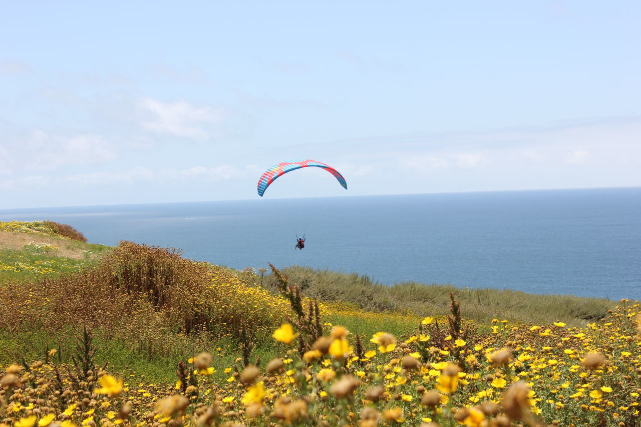 nature, beauty in nature, sea, scenics, plant, adventure, horizon over water, sky, water, outdoors, growth, day, leisure activity, tranquil scene, one person, tranquility, parachute, real people, mid-air, flower, landscape, grass, extreme sports, paragliding, people