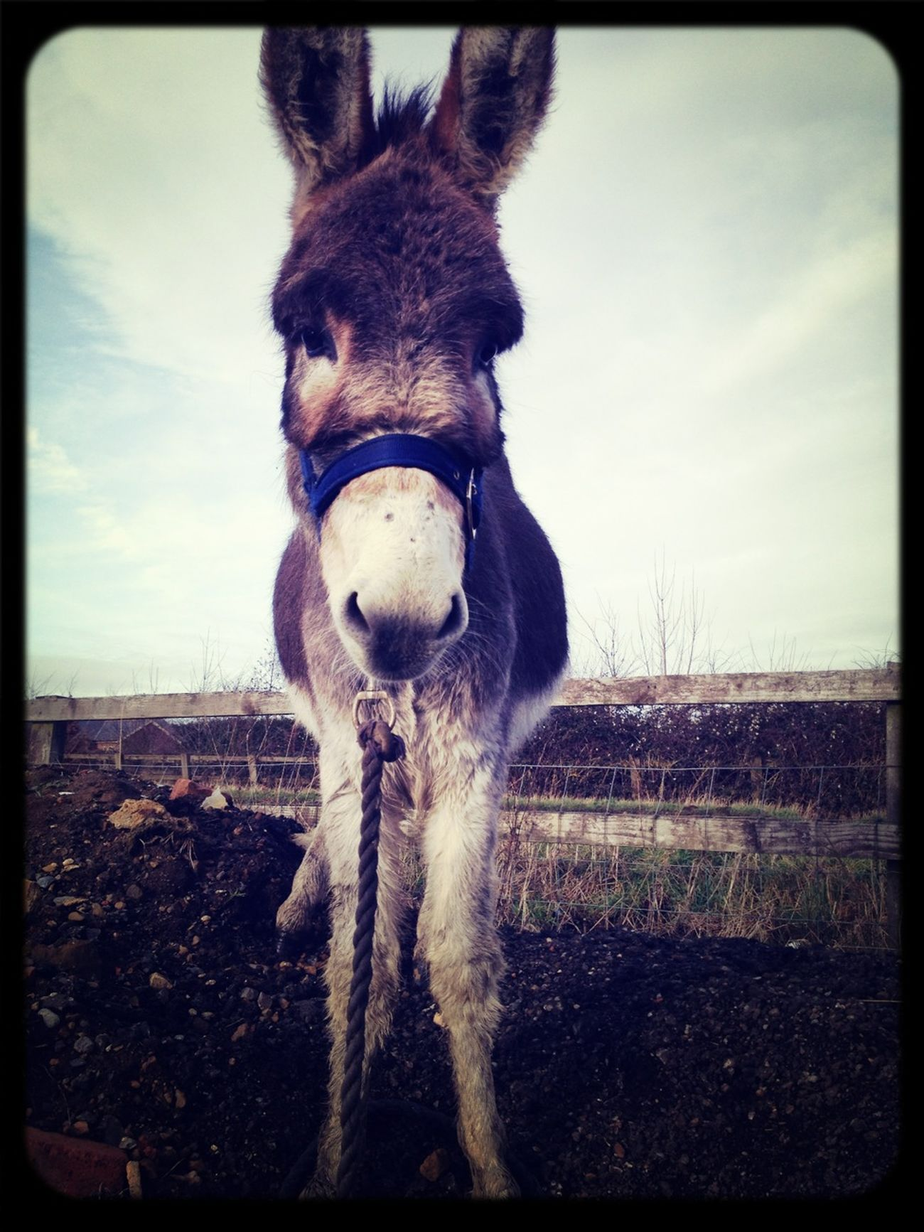 Loving My Donkey