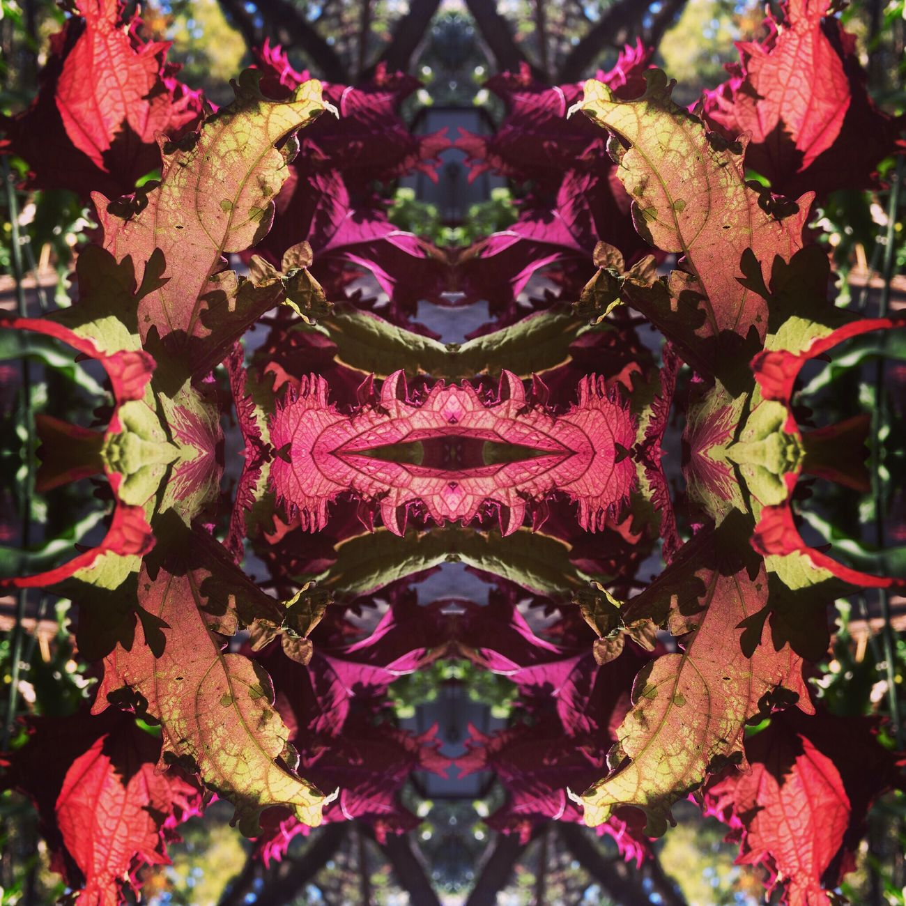 Coleus Coleus Kaleidoscope Colors Mandala Art Playing With Effects