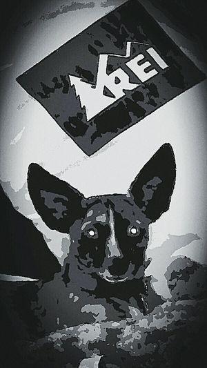 Mr wiggie sitting around Enjoying Life Pet Photography  Black And White Mr.Wiggie Dog