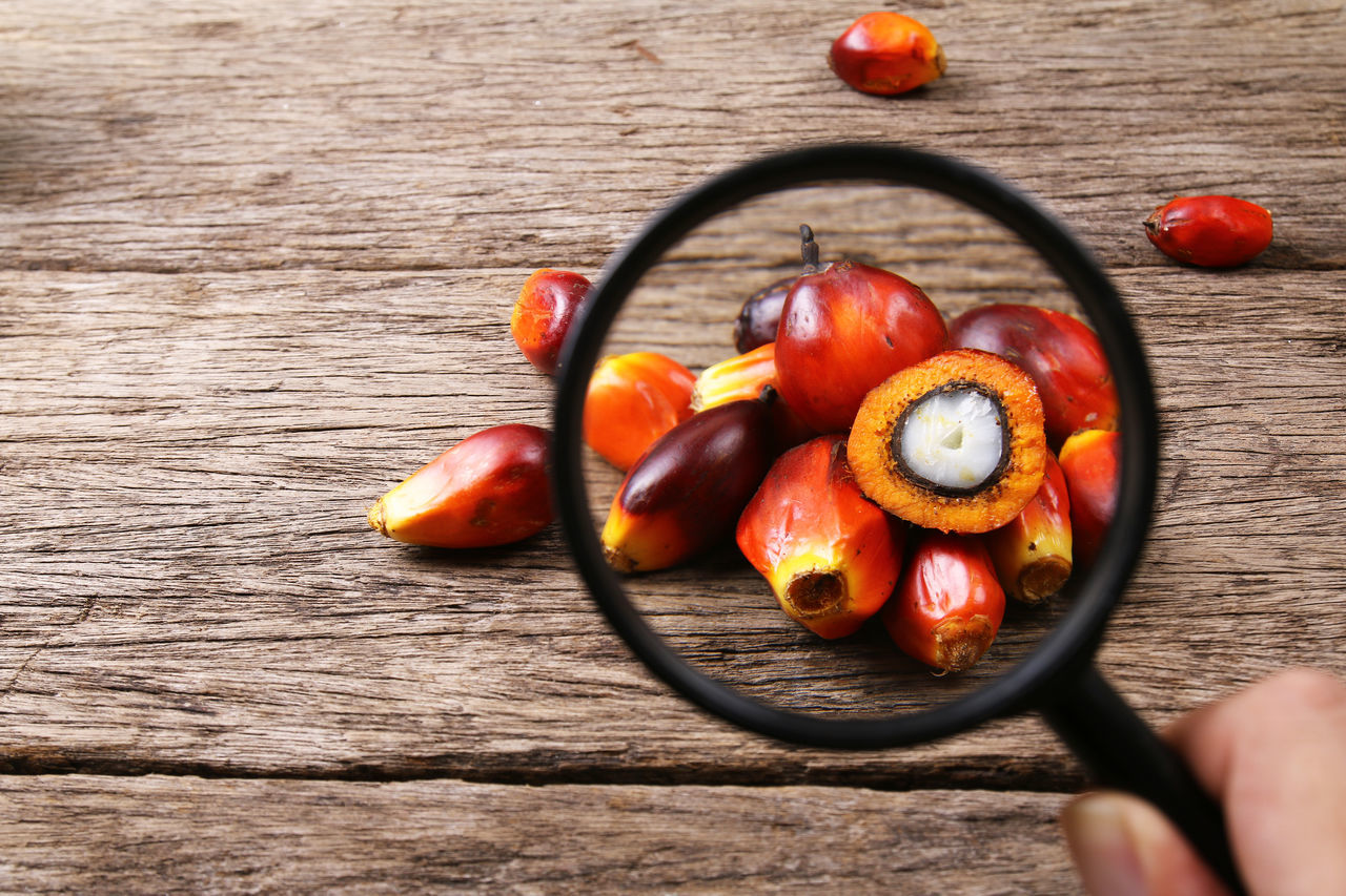 Oil palm seeds with magnifying glass. Concept of palm oil market watch. Agriculture Analysis Commodity Consumer Content Cooking Export Fruit Glass INDONESIA Indoors  Industrial Industry Ingredient Macro Magnifying Glass Malaysia Mammal Market Oil Oil Palm Palm Palm Oil