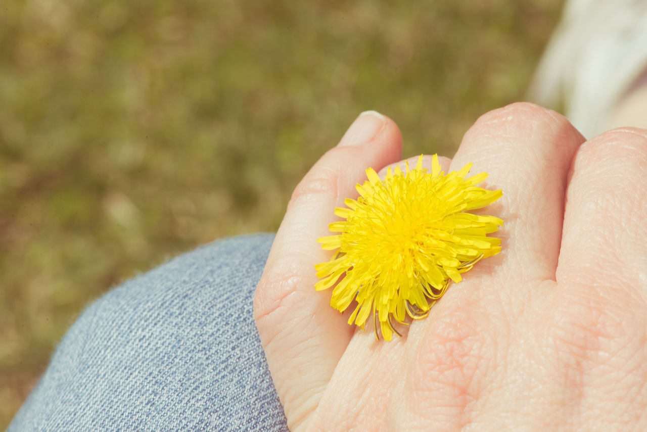 Beauty In Nature Casual Close-up Dandelion Flower Flower Head Focus On Foreground Fragility Girly Human Hand Leisure Activity Lifestyles Love ♥ Nature Outdoors Real People Ring Romantic Simplicity Spring Yellow Live For The Story