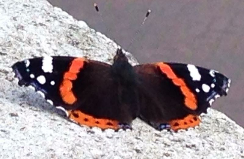 I got a visitor on my balcony Summer Butterfly Lucky Nature_collection Life Amsterdam Vrijheidslaan Your Amsterdam