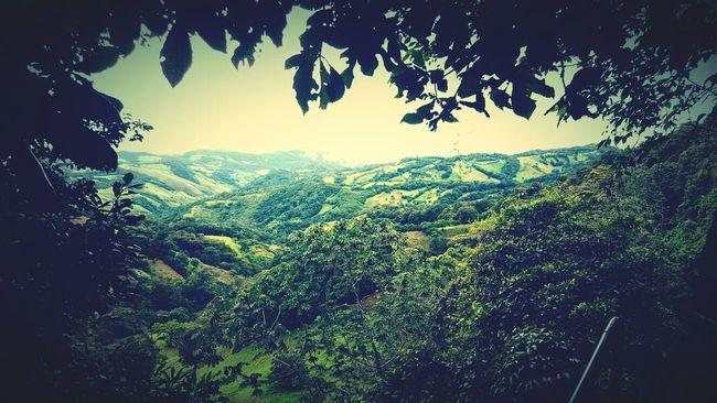 Monteverde Costa Rica Puravida Viajar