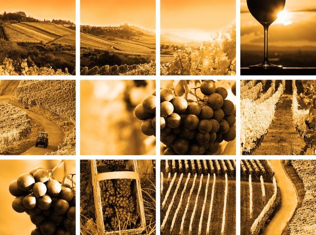 wine collage sepia style Autumn Backgrounds Collage Colorful Drinks EyeEm Gallery Field Grapes Landscape Landscapes With WhiteWall Montage Montage Photography Nature No People Outdoor Pictures Photo Montage Riesling Sepia Summer Vineyard Vintage Wine Wine Farm Wineglass Winery