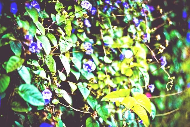 Green Veli Flowers Spring Into Spring