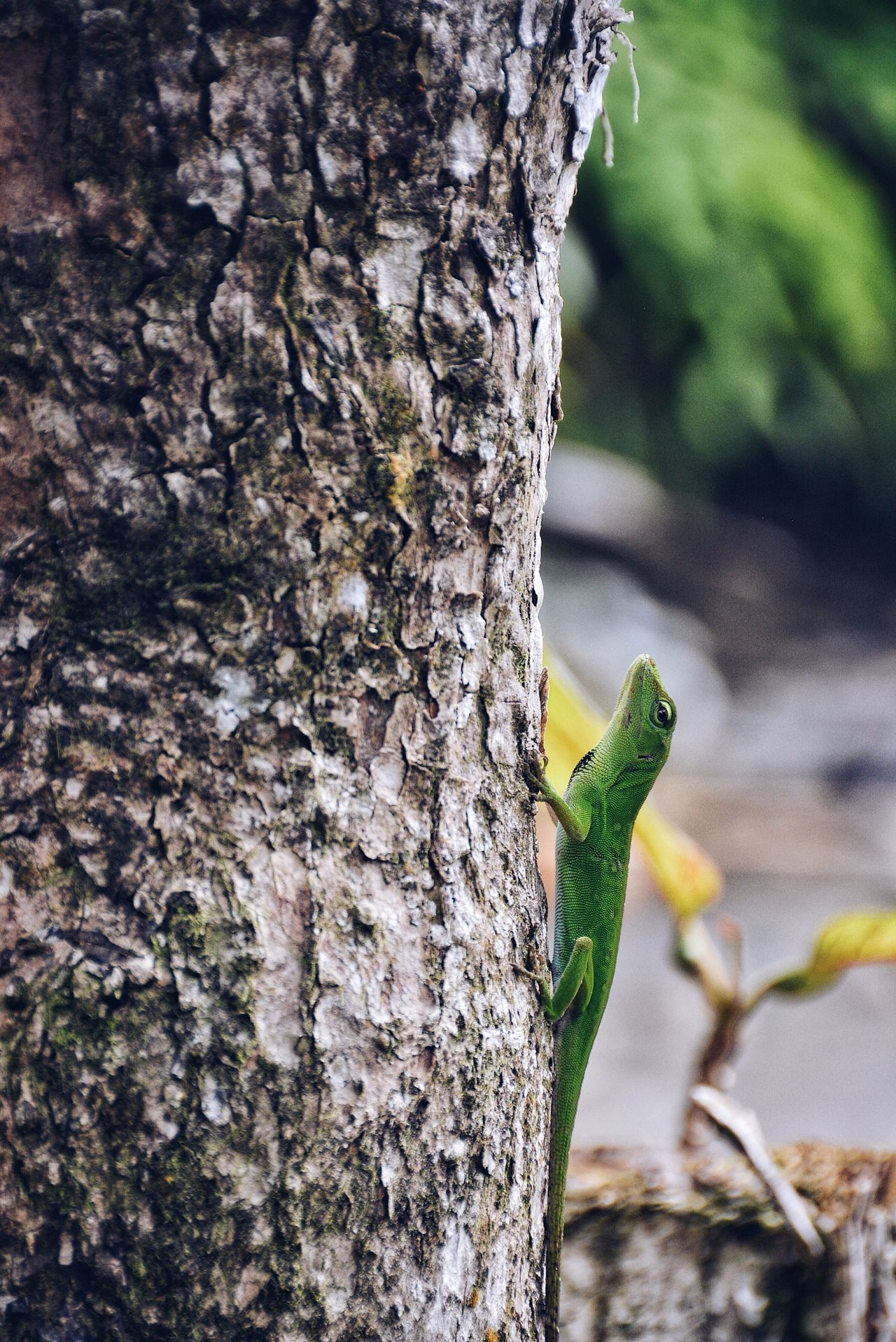 Against Gravity. Tree Trunk Tree Nature Insect Animals In The Wild Textured  Close-up Animal Themes Animal Wildlife Wood - Material Beauty In Nature Nature Jungle Tropical Forest Animal Animals In The Wild Wildlife & Nature Wildlife Lizard Amphibians