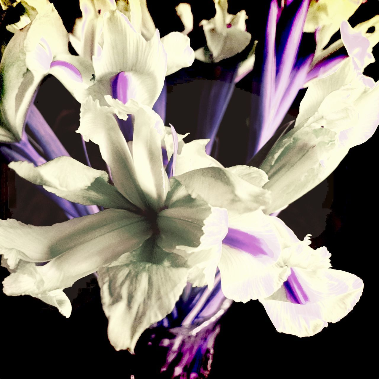 Iris - Plant Flower Fragility Freshness Nature Beauty In Nature Purple Petal Close-up Growth Flower Head No People Day Outdoors