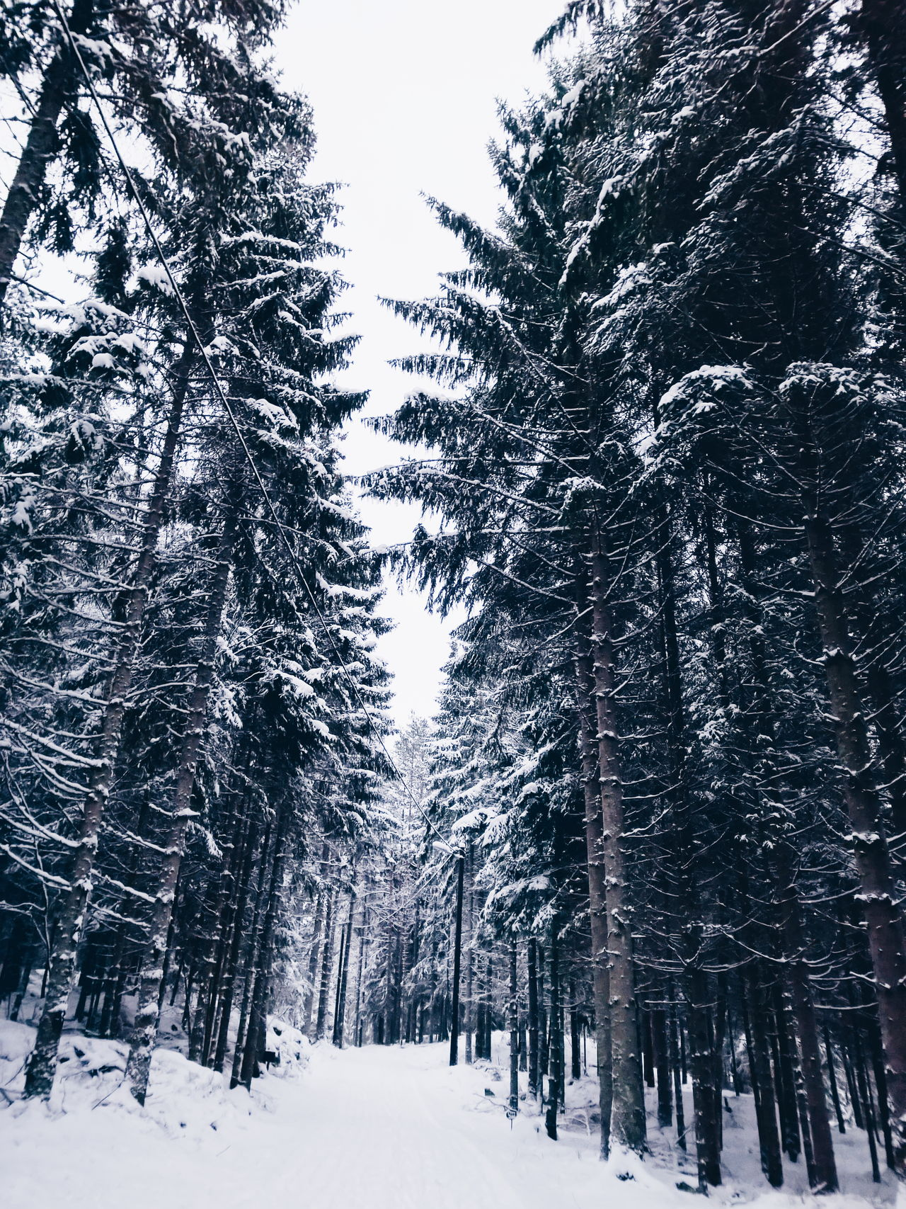 Beautiful stock photos of norway, Beauty In Nature, Branch, Cold Temperature, Day