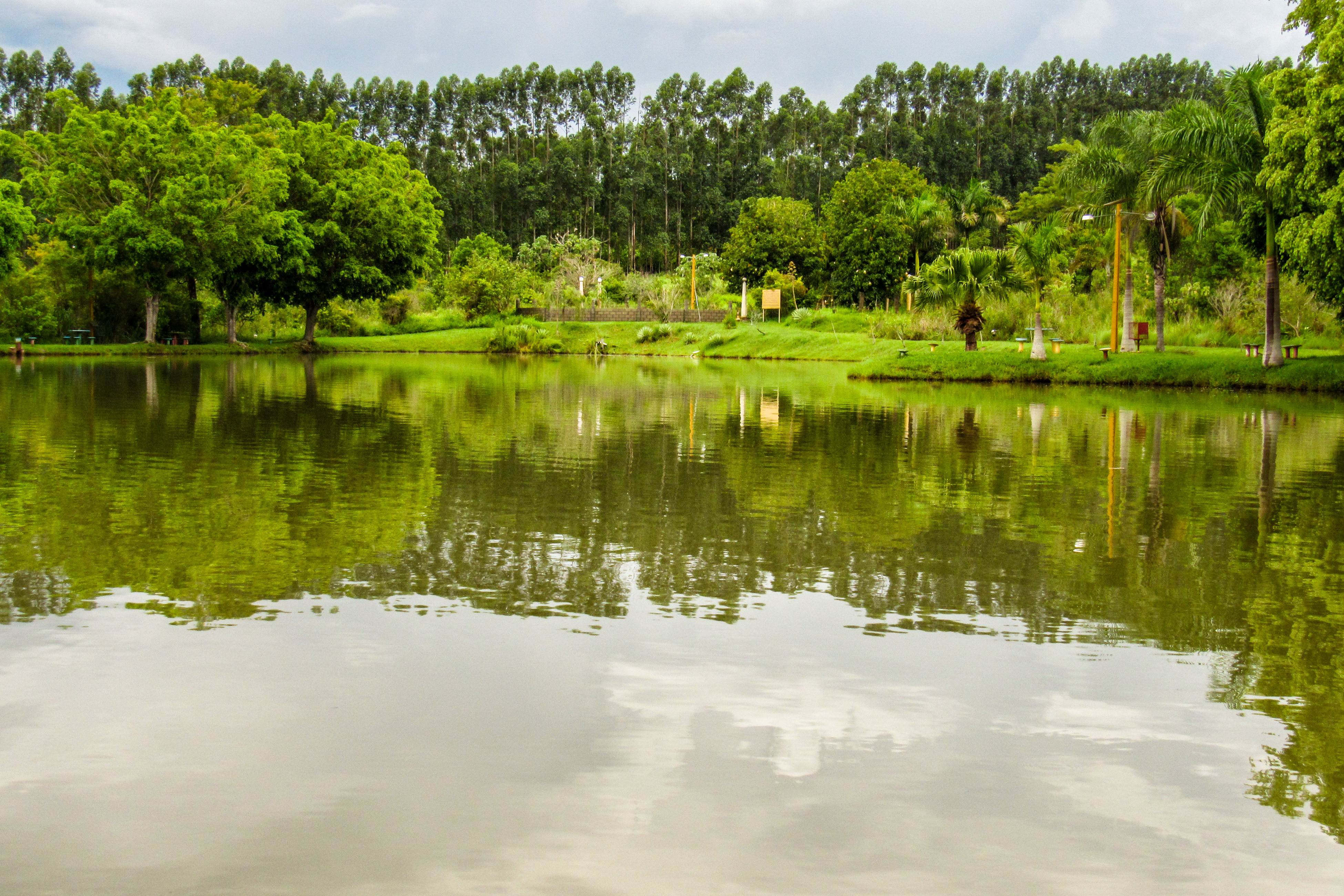reflection, tree, nature, lake, no people, day, water, outdoors, green color, tranquility, sky, beauty in nature