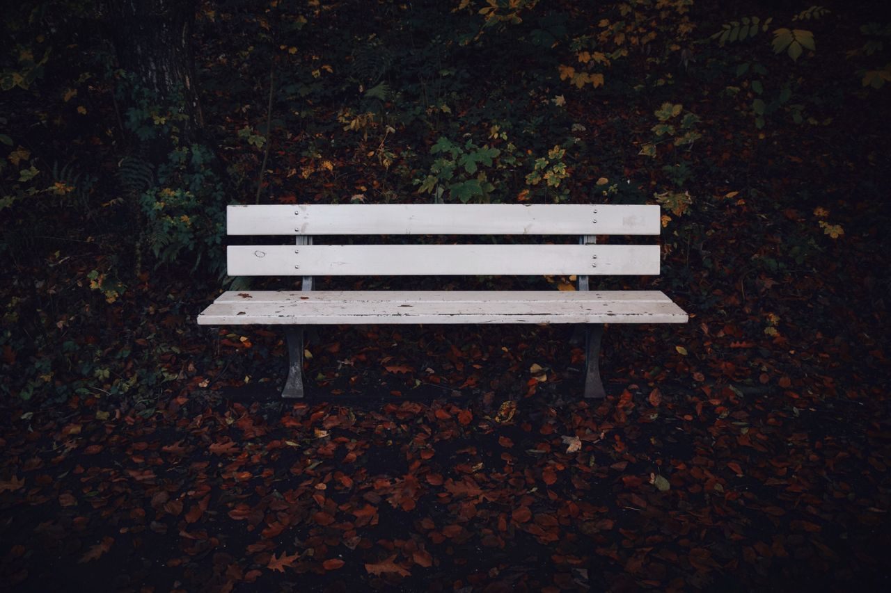 autumn, leaf, bench, change, leaves, park - man made space, nature, beauty in nature, fallen, tranquility, outdoors, no people, day, tree, maple, seat, scenics
