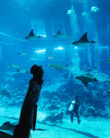 Seaaquarium Singapore Sentosa Singapore Sentosa Island Sentosa S.e.a Aquarium Stingray Oceanlife Fish Stressreliever