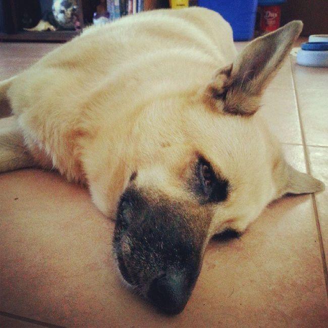 Extreme Lazy Closeup Easylikesundaymorning dog nap dogstagram instadog