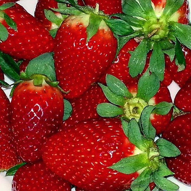 100happydays Fresas 😋🍓🍓🍓🍓🍓 😀❤ Fresas Strawberries Meencantan Inlove Rojo Red Fruta Fruit Bodegón Composicion Composition Dieta Diet Sano Healthy Comida Food Paraperderpeso Tolooseweight