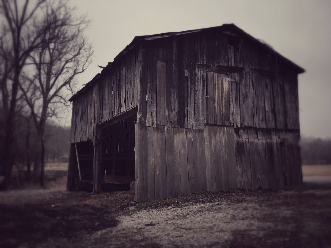 abandoned, built structure, architecture, barn, no people, wood - material, building exterior, outdoors, clear sky, day, sky, desolate, nature